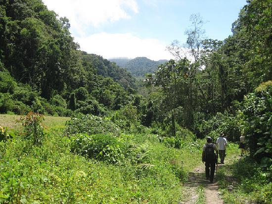 Boquete Mountain Safari Tours: hiking Volcan Baru