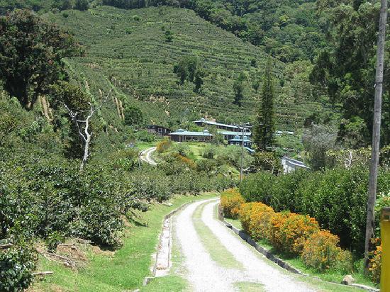 Boquete Mountain Safari Tours: Finca Lerida