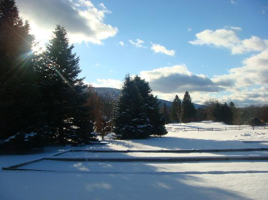 Evergreen at The Thompson House: view next to the evergreen and of the golf course