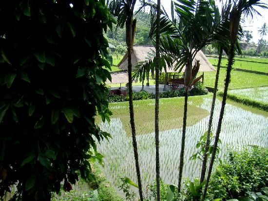 Saren Indah Hotel: View from Bathroom