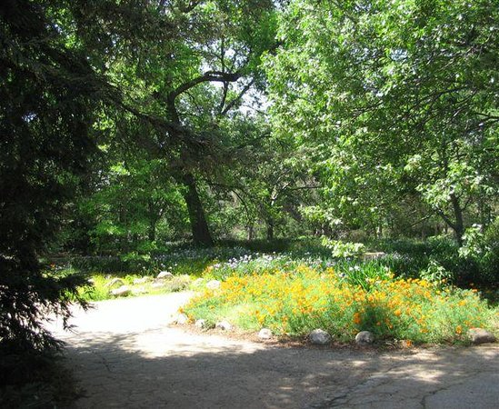 Claremont, Californien: lots of wildflowers in bloom