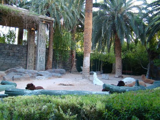 Mirage Secret Garden Coupon Garden Ftempo