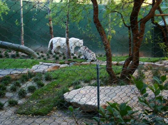 Secret Garden Mirage 2008 Picture Of Siegfried Roy 39 S Secret Garden And Dolphin Habitat Las