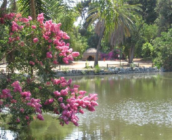 Fountain Pool Picture Of Los Angeles County Arboretum Botanic Garden Arcadia Tripadvisor