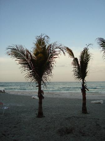 Sun 'n Sea: The Beach