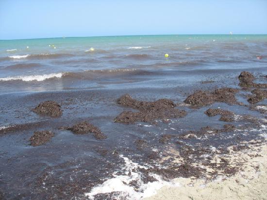Hotel Nereides: la plage1