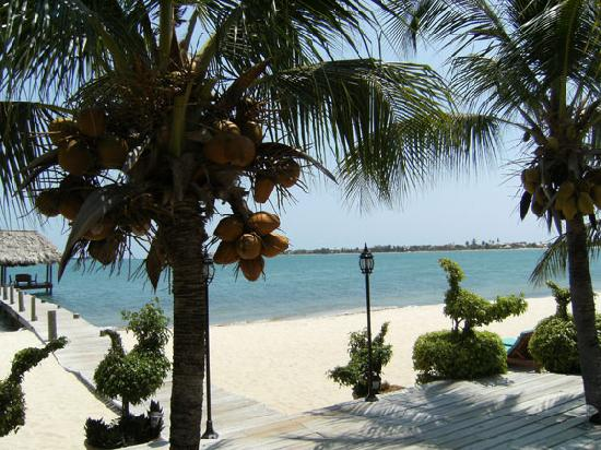 Chabil Mar: PIck you own coconuts