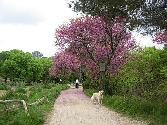 Saint-Rémy-de-Provence, France : Les Alpilles