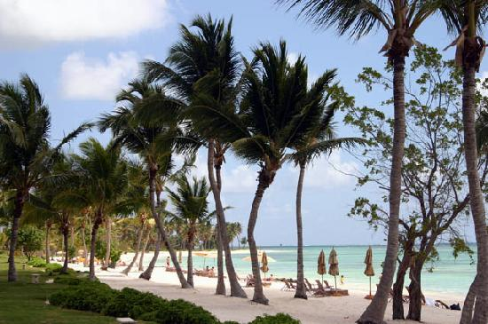 Tortuga Bay, Puntacana Resort & Club: The beach