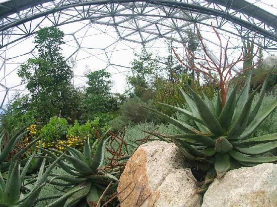 Eden Project: Inside meditteranean Biome