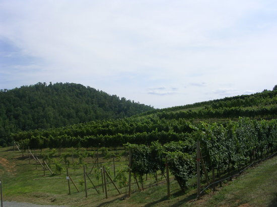 Faber, VA: View of vineyards from outside sitting area