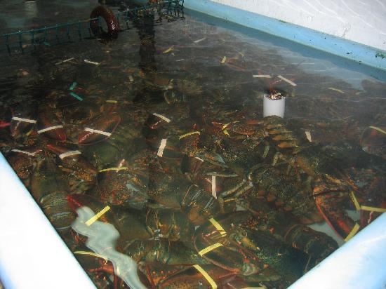 Wyndham Newport Overlook: Pick your own lobsters