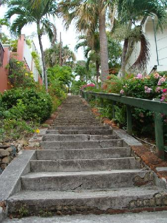 Charlotte Amalie, St. Thomas: looking up