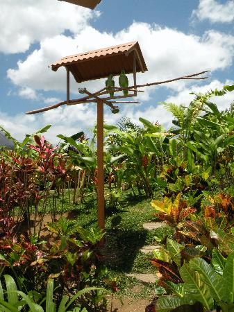 Nayara Resort Spa & Gardens: The parrots (they love to talk in the morning)