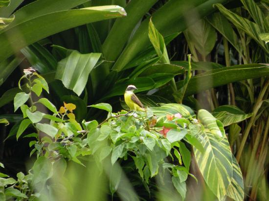 Nayara Hotel, Spa & Gardens: Bird that was hanging out near the pool