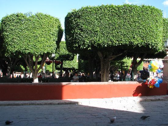 Hacienda El Santuario: El jardin