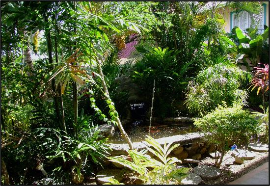 Enchanted Waters Tobago: Fish Pond