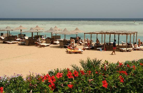 Blue Reef Red Sea Resort: La plage aménagée