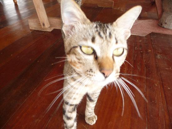 Big Easy: Basil the cat