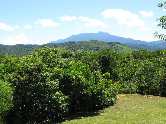 Red Mill House in Daintree: View at Swampy Things, Daintree Village