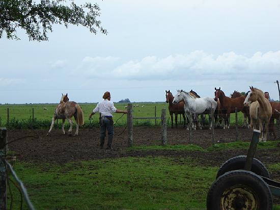 Santa Maura: Horses and vaqueros