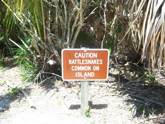 Caladesi Island State Park: Beware of Rattlesnakes