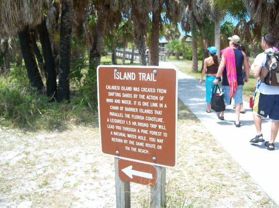 Caladesi Island State Park: Caladesi was a real disapointment