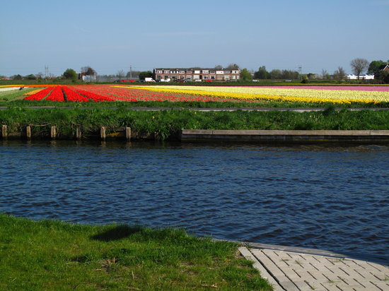 Lisse, The Netherlands: Bicycling thru fields