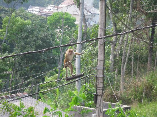 Majestic Tourist Hotel: The monkey on the wires