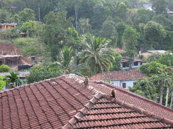 Majestic Tourist Hotel: The monkeys on the roofs