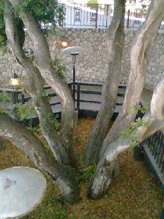 Holiday Inn Express Grover Beach-Pismo Beach Area : Beautiful old oak tree