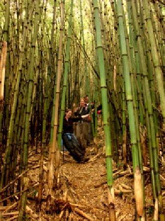 Nkuringo Bwindi Gorilla Lodge: Bamboo forest up Mgahingo Volcanno