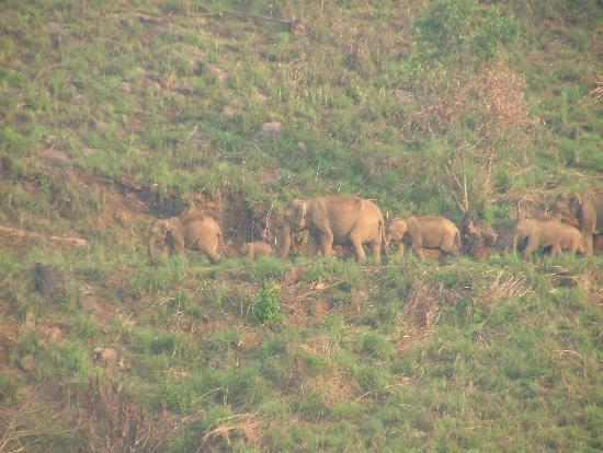 Periyar Bungalows: Elephants in the Hills.