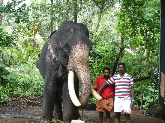Guruvayur, India: Me Standing with an Elephant