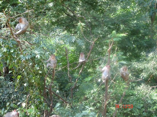 Madurai, Indien: Monkeys in Azhagar Kovil