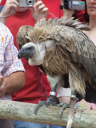 Birds of Prey Show - Selwo Aventura