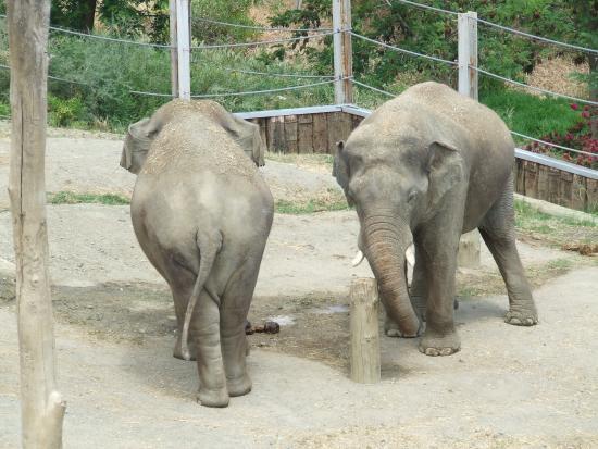 Elephants - Selwo Aventura
