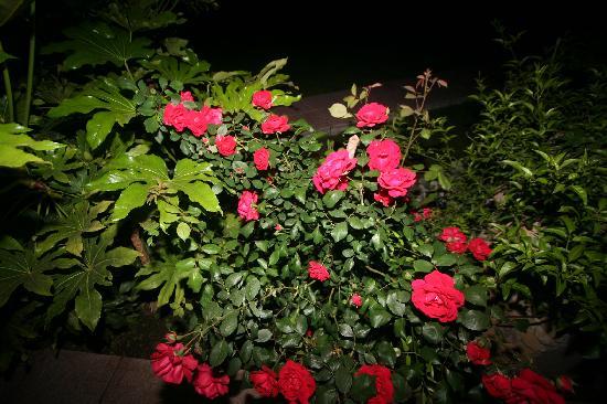 Luana Inn Bed and Breakfast: Roses