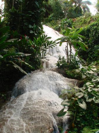 Shaw Park Gardens & Waterfalls: Natural Waterfall at Shaw Gardens