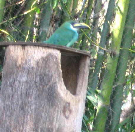 Santa Ana Zoo at Prentice Park: Solemn fellow !