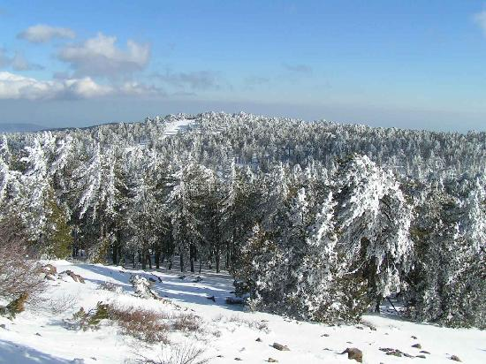 Troodos Mountains, Chipre: Spectacular winter in Troodos