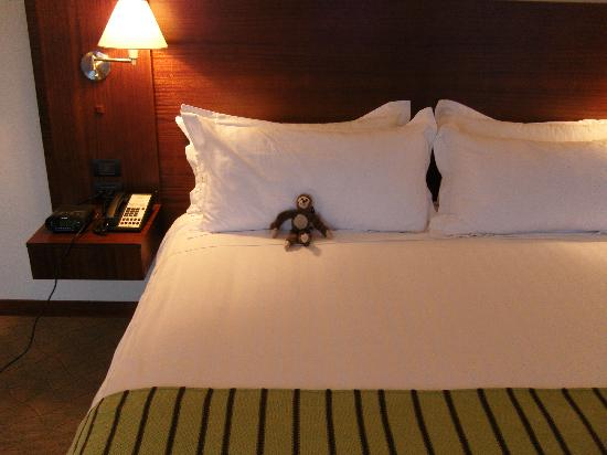 Holiday Inn Express Quito: Traveling Monkey Taking A Nap