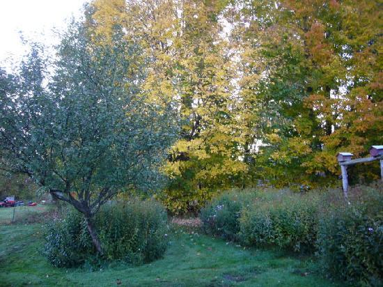 Suzanne's B&B: Gorgeous gardens
