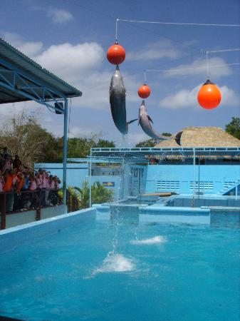 Punta Cana, Dominican Republic: Dolphin show