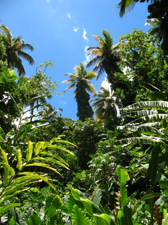 Jungle Tours St. Lucia : Hiking through the rainforest