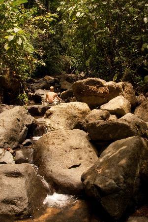 Oxygen Jungle Villas: Stream and pools