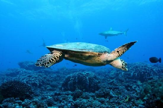 Eleuthera Bora Diving Center: underwater 1