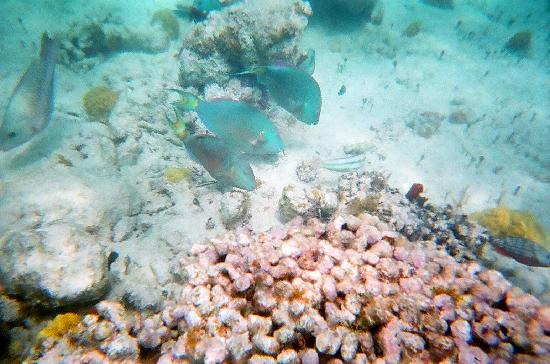 Providenciales: Snorkeling at the Coral Gardens