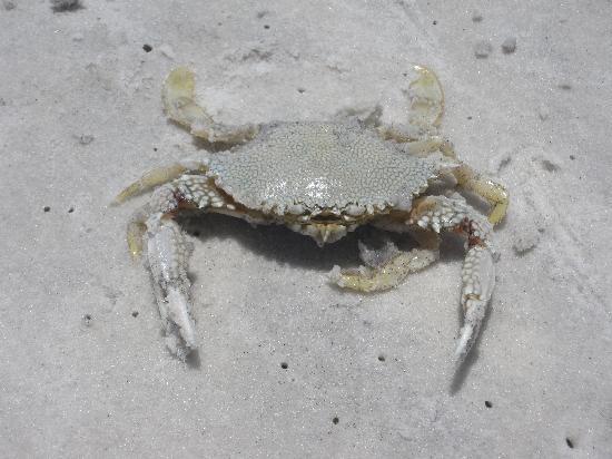 Types Of Crabs At Myrtle Beach