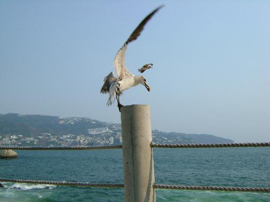Las Torres Gemelas: Muchas aves y sus desechos